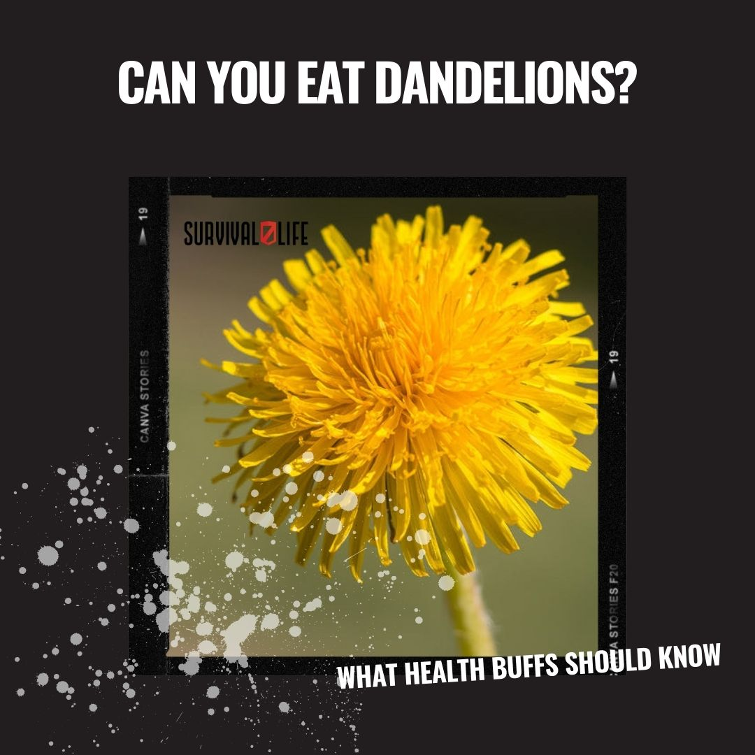 Can You Eat Dandelions? Which Are The Edible Parts & How To Eat Them
